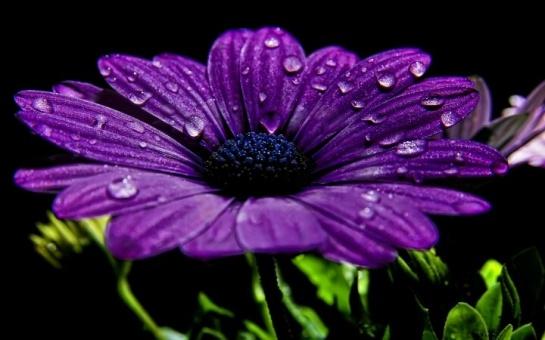 Flor ao amencer